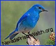 Nevada Prison Watch